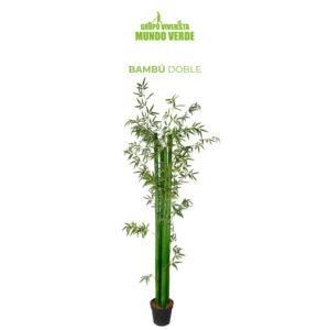 Bambú doble