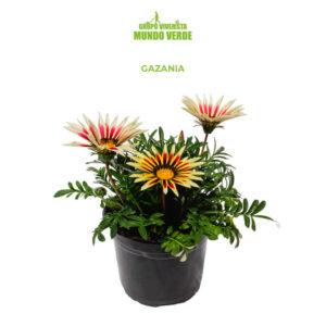 Plantas / Herbáceas