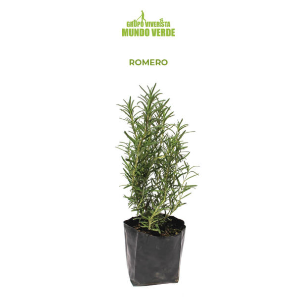 Romero planta