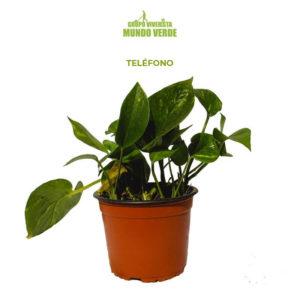 Teléfono planta
