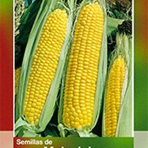 Semillas de maíz dulce