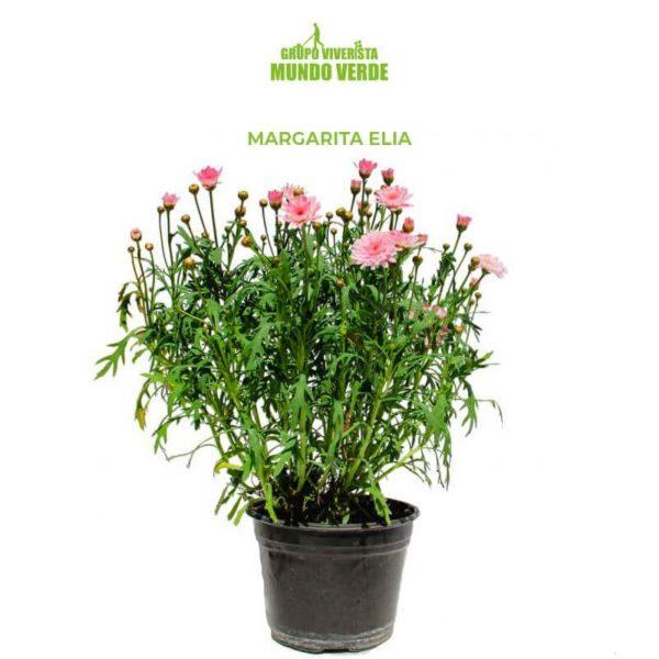 Margarita Elia 2
