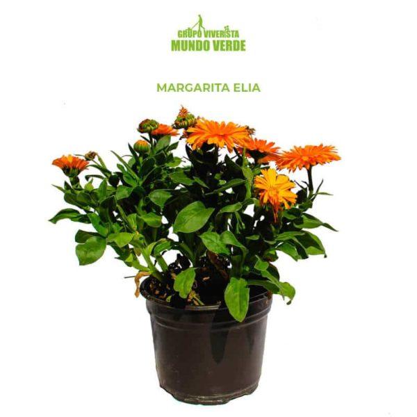 Margarita Elia 3