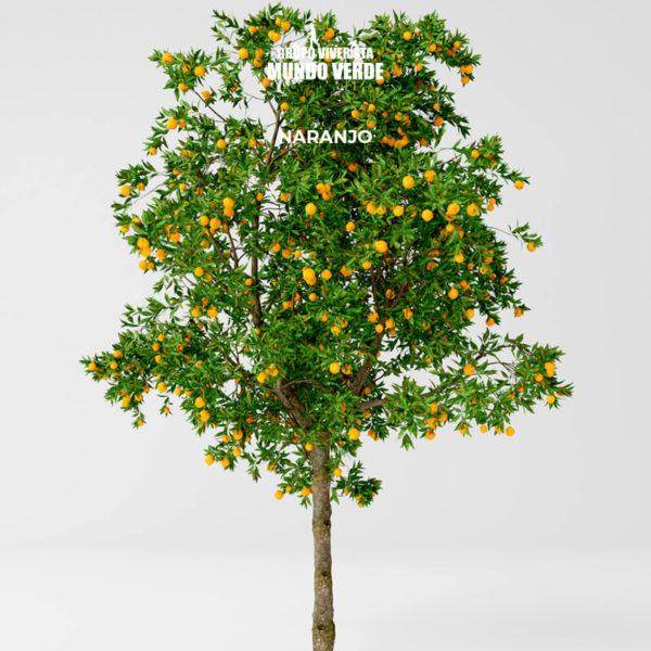 Naranjo árbol