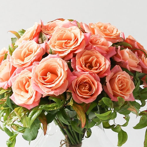miss piggy rosas