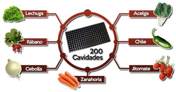 semillas 200 cavidad